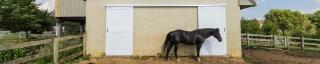 horse standing in front of new barn doors